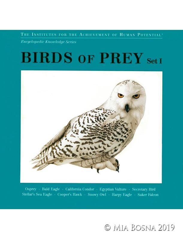 birds of prey paintings